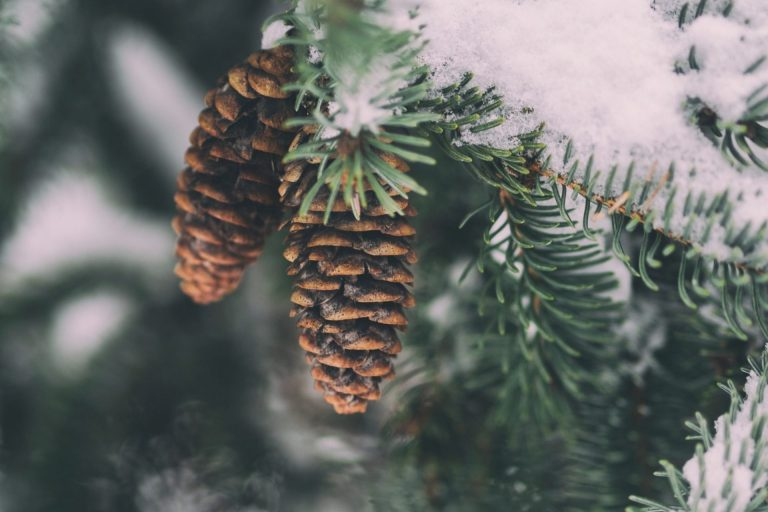winter events in the woodlands texas, upcoming events in the woodlands tx, upcoming winter events in the woodlands tx, zipps liquor, zipps liquor store, liquor store, liquor store the woodlands tx